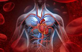 Els anells vasculars són alteracions que es produeixen en les grans artèries i que comprimeixen la tràquea o l'esòfag. Aquesta patologia afecta els infants (Hospital Universitari Vall d'Hebron)