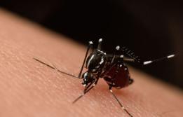 Infecció per virus del Zika a Vall d'Hebron